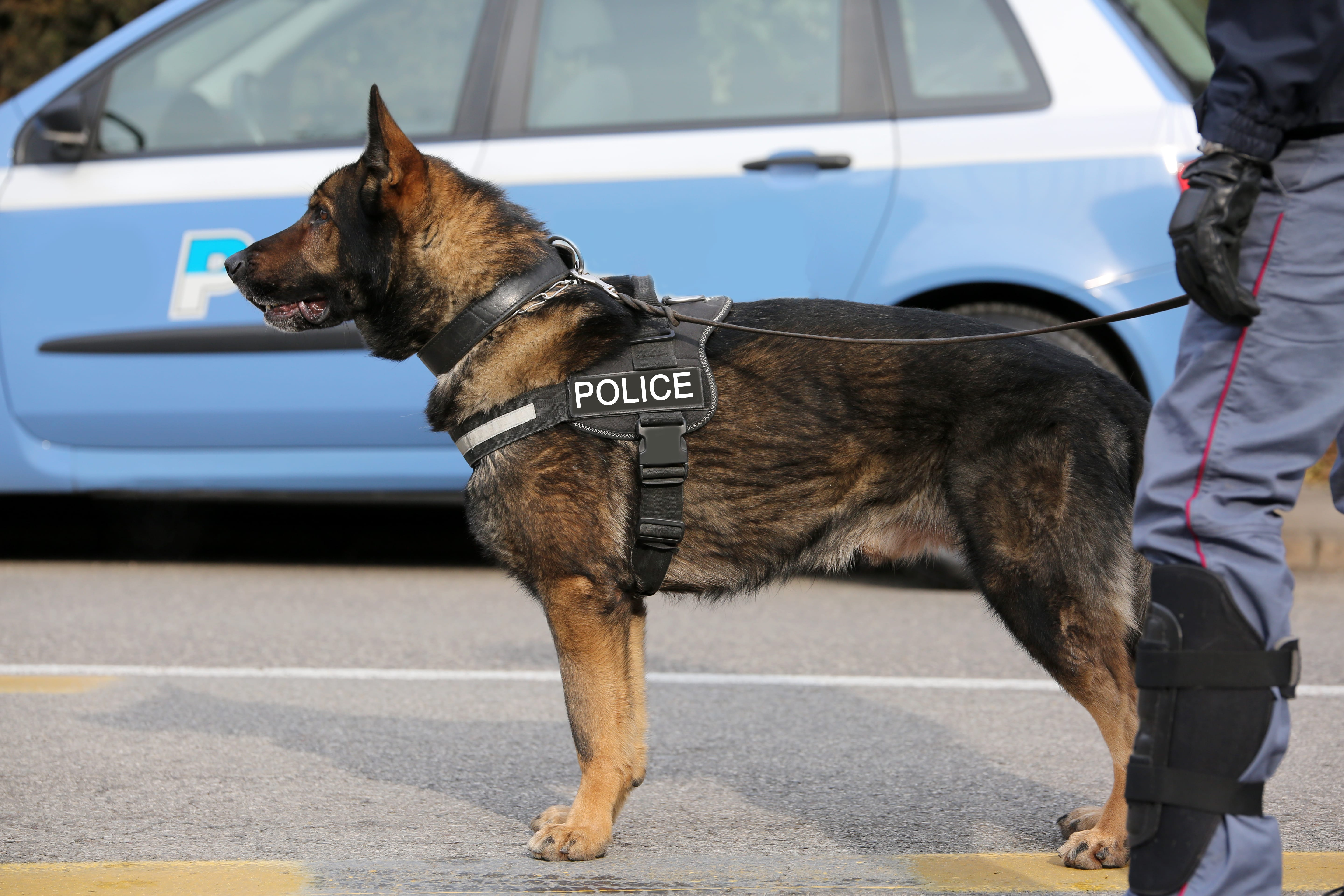 ESD K9s: Sniffing Out Cybercrime | IMI